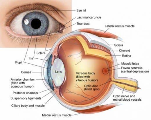 زراعة-قرنية-العين-وعلاجها